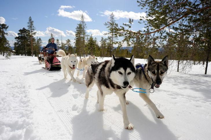 Husky sledging in Sweden<br />© Idre Fjäll