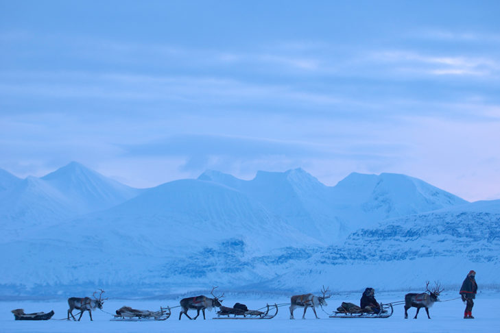 <strong>Reindeer are to be found everywhere</strong><br />© Staffan Widstrand